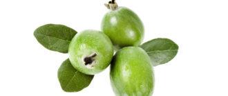 Фейхоа полезные свойства и противопоказания ягоды